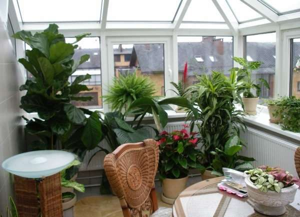 зимний сад рядом с кухней на балконе или лоджии