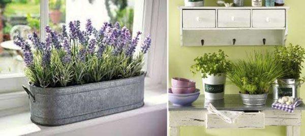 цветы в интерьере кухни в однокомнатной квартире
