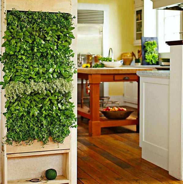 растения на кухне гостиной