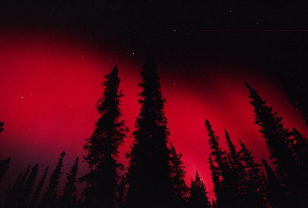 Aurora Red модный цвет этого сезона