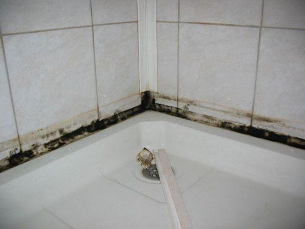 грибок на стене ванной